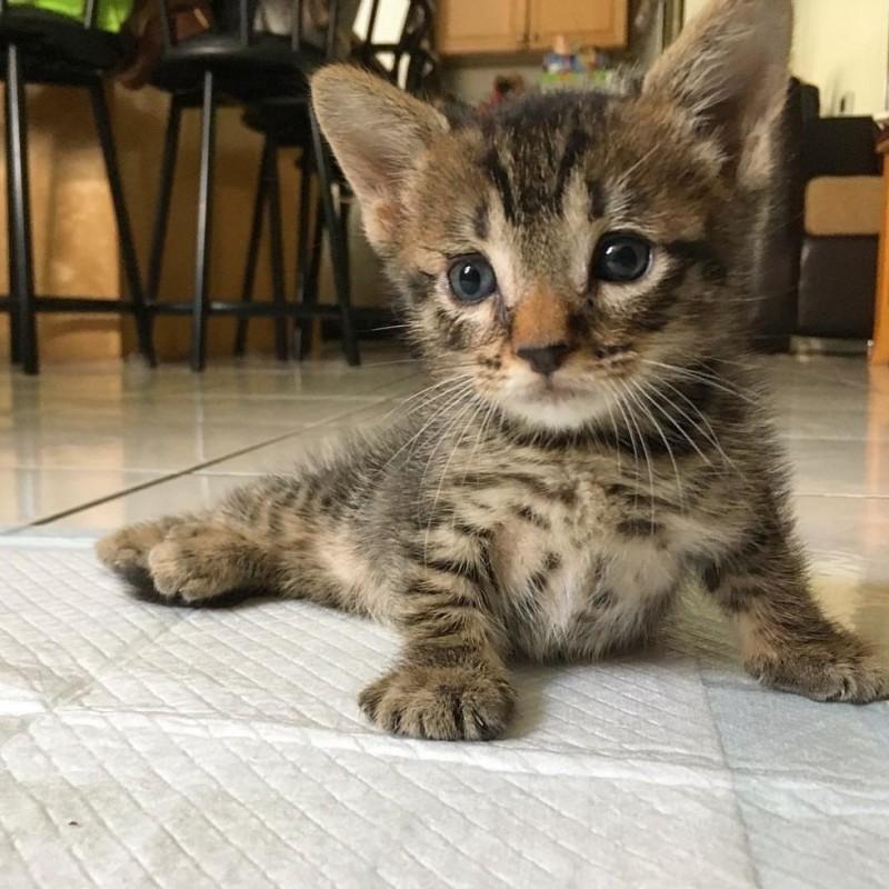 Врач посоветовал усыпить парализованного котенка, но люди дали ему еще один шанс