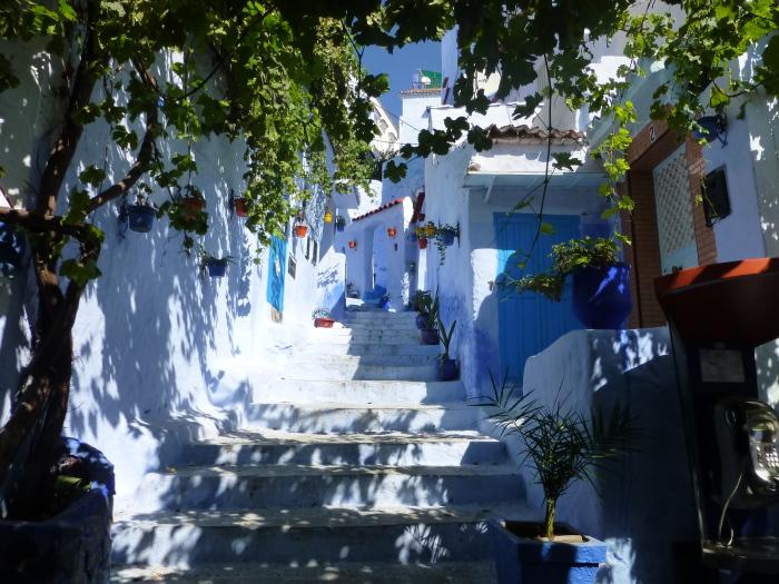Яркие растения разбавляют синь улиц. / Фото: www.fez-chefchaouen-tours.com