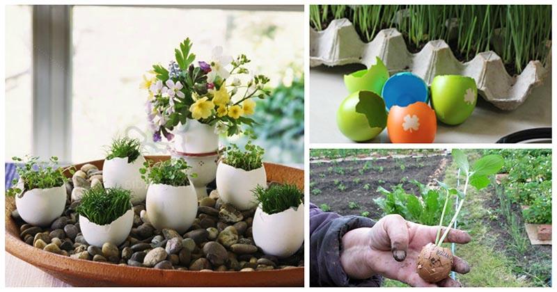 Необычно: находим новое применение яичной скорлупе и лотку для яиц