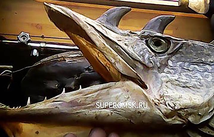 В Омской области рыбак выловил двух щук-мутантов с рогами