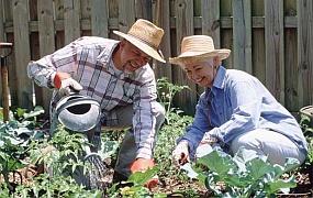 Огородные страдания, или как правильно отдыхать на даче