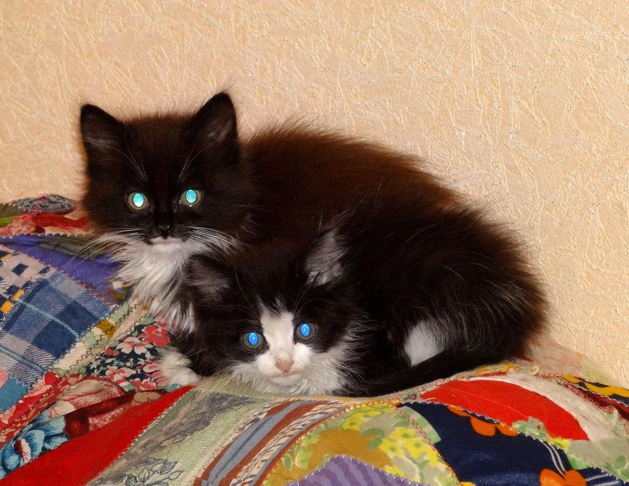 Однажды в дождливый денек я нашла мокрую коробку с двумя испуганными дикими котятками