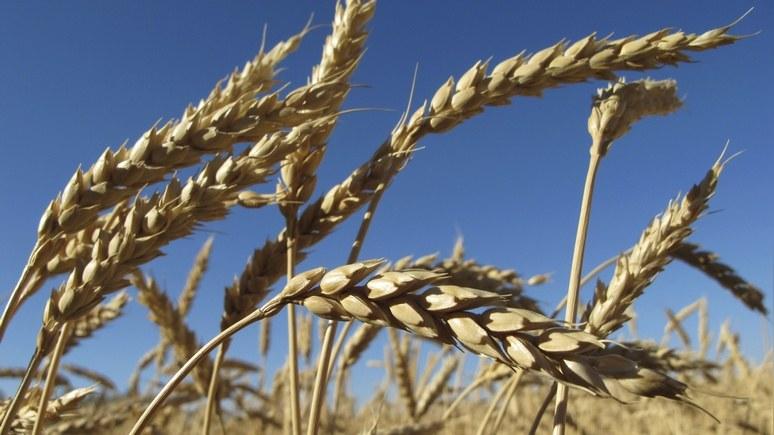 Bloomberg: Россия слезет с нефтяной иглы и станет зерновой сверхдержавой