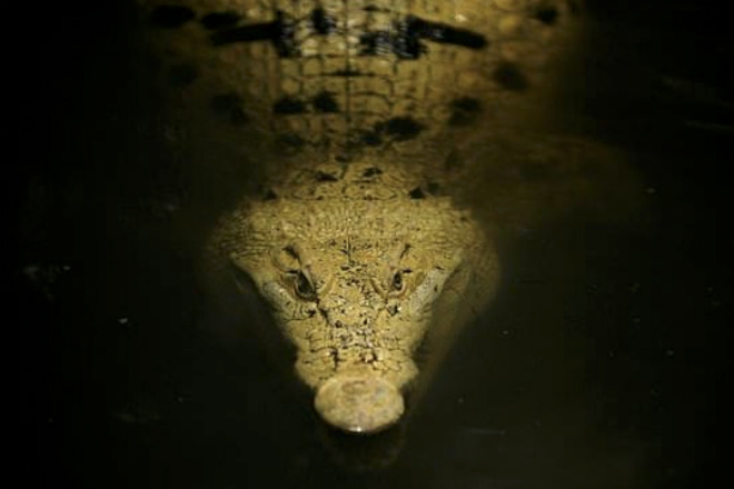 Отец подрался с огромным крокодилом и спас сына