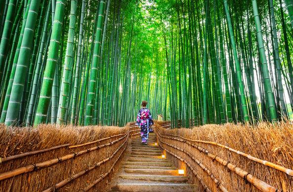 СМИ рассказали о японской традиции лесных купаний
