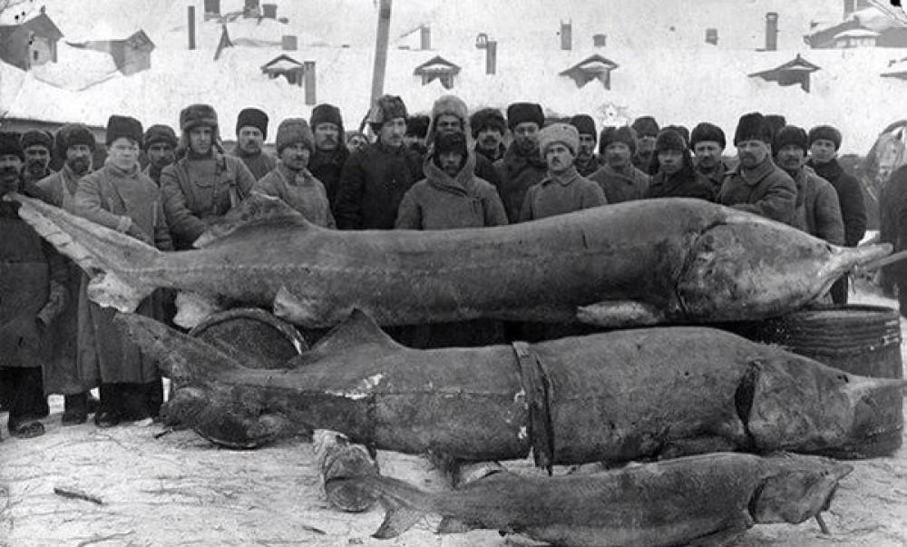 Вот такая рыбка когда-то ловилась в русских реках