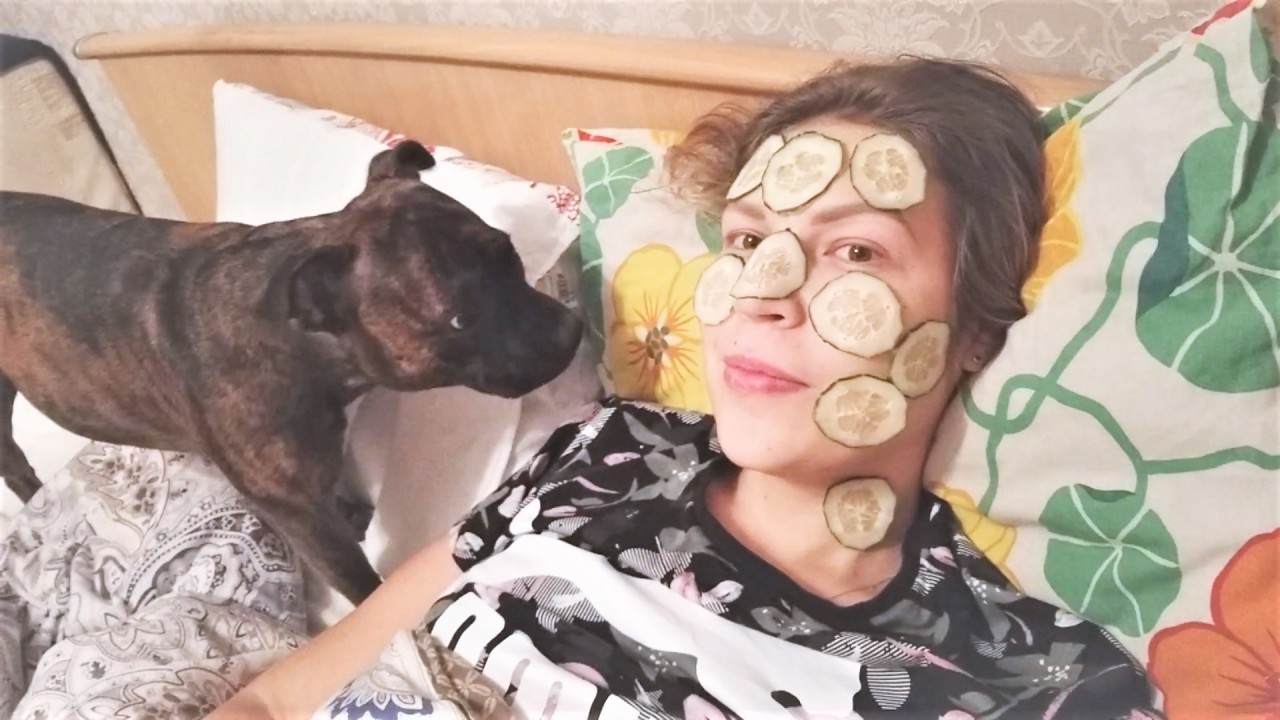 Смешные и милые собаки декаб…