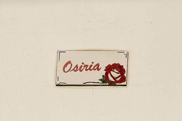 3120110107 3ae519a2c8 z Роза сорта Osiria