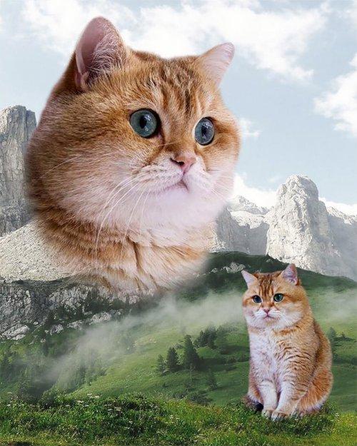 Гламурные фотографии животных
