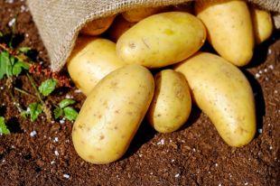 Как полезнее всего готовить картофель?