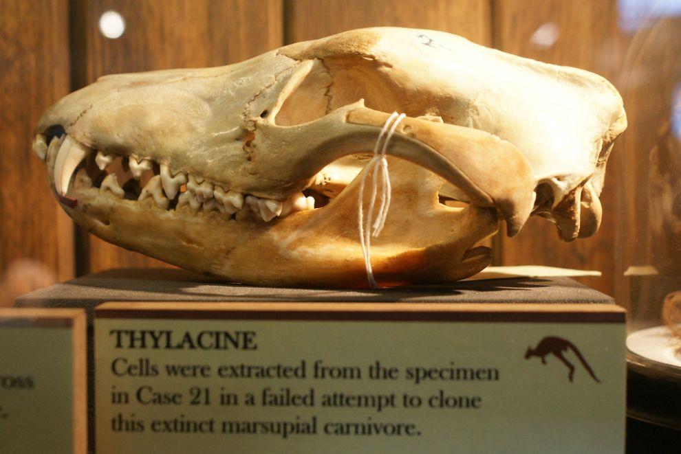 gmoz27 Лондонский музей зоологии и сравнительной анатомии Гранта