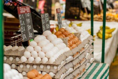 ТОП-25: Удивительные факты про яйца, которые вы могли не знать.