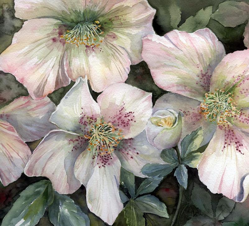 Цветы стыдливые, как томны ваши чары… Британская художница Yvonne Harry