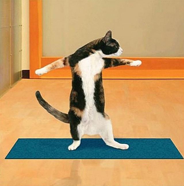 можете посмотреть как заниматься кошачьим фитнесом речь