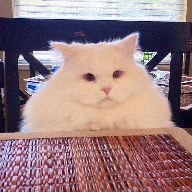 Найденный на обочине котенок-доходяга вырос в роскошного котяру!