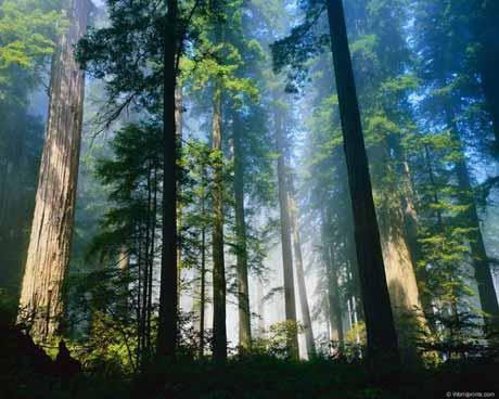 Как выжить в лесу!