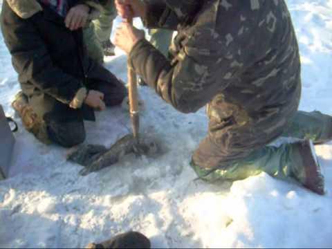 ловля сомов на украине видео