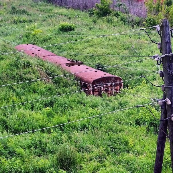 Заросшая железная дорога заброшенное, красиво, мир без людей, природа берет свое, фото, цивилизация