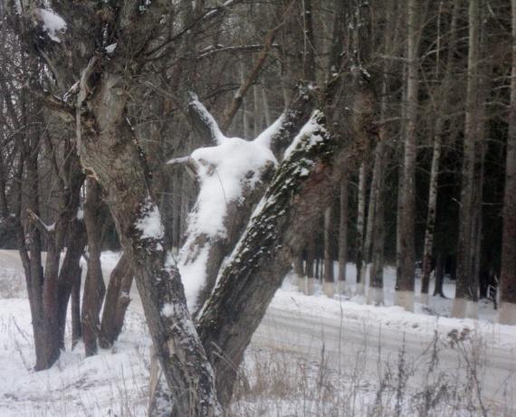 Кто-то вышел из леса...