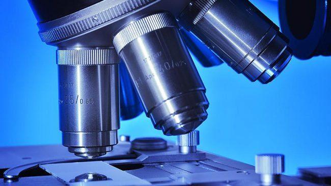 Загляни в меня: создан микроскоп, позволяющий наблюдать за движением клеток внутри организма