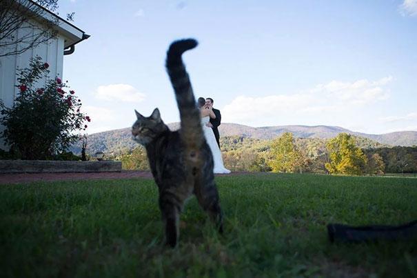 20 котов, которые появились там, где их никто не ждал