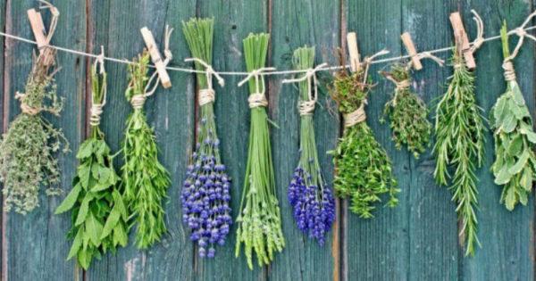 Как использовать растения для лечения заболеваний