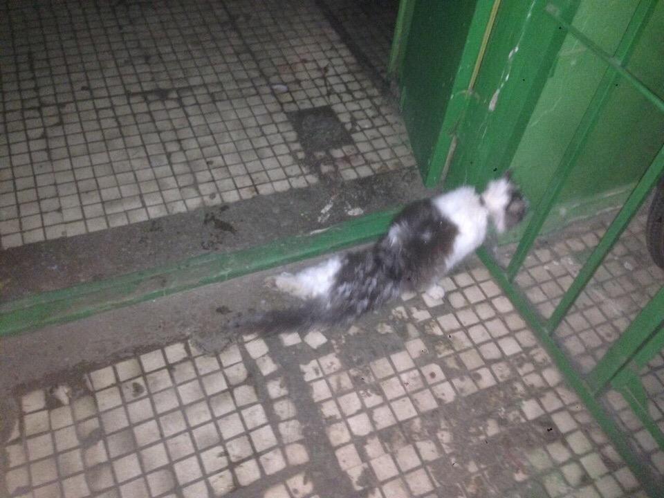 «Они мяукали, заглядывая в глаза прохожим!» Кошка с травмой позвоночника и котенок у дороги теперь дома