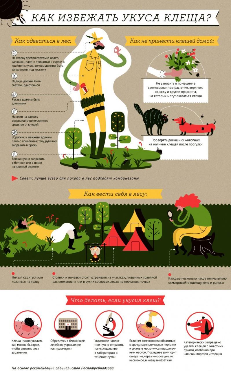 Клещей бояться – в лес не ходить?