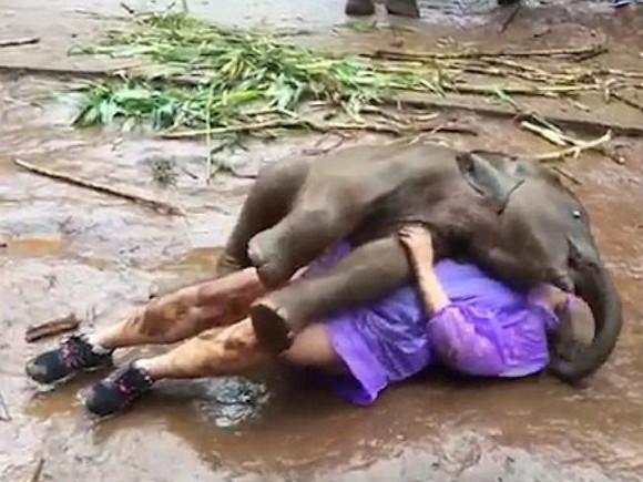 Самый волшебный день в жизни! Веселый слоненок завалил туристку прямо в грязь