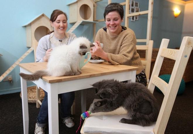 Необычная компания: 5 кафе, где посетители могут пообщаться с животными!