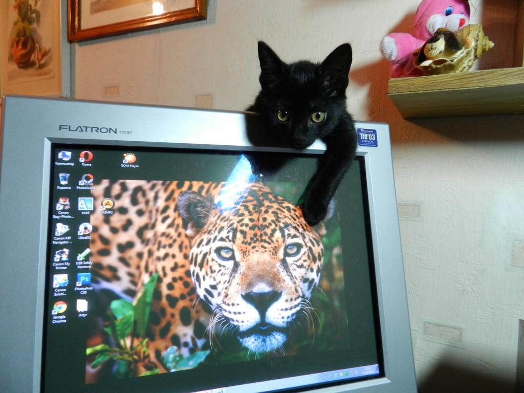 Фото черных кисок 23 фотография
