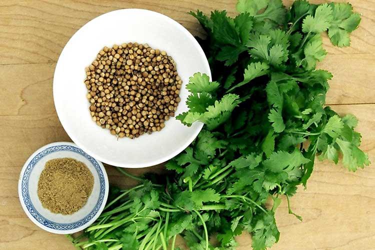 Лечебные свойства семян кориандра