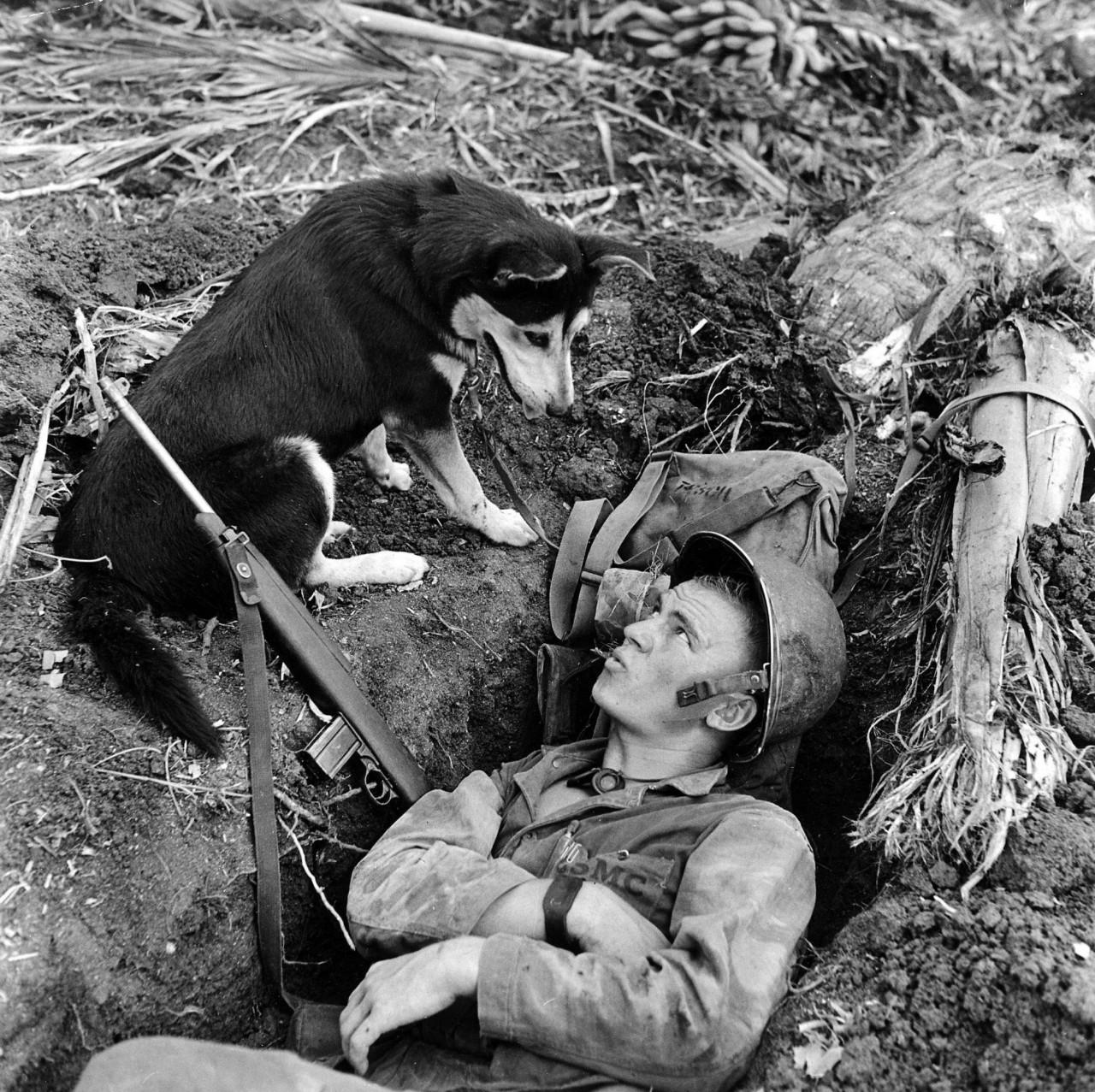 10 знаменитых собак Второй мировой войны