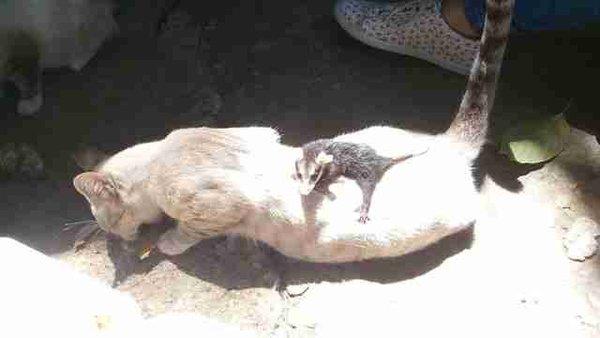 Котенок принес домой чужого ребенка