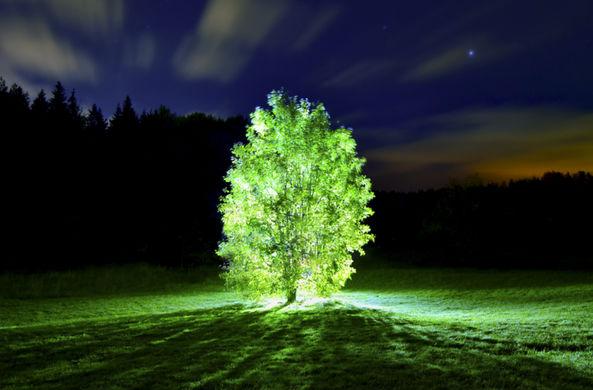 Нанотехнологии позволили превращать растения в фонари