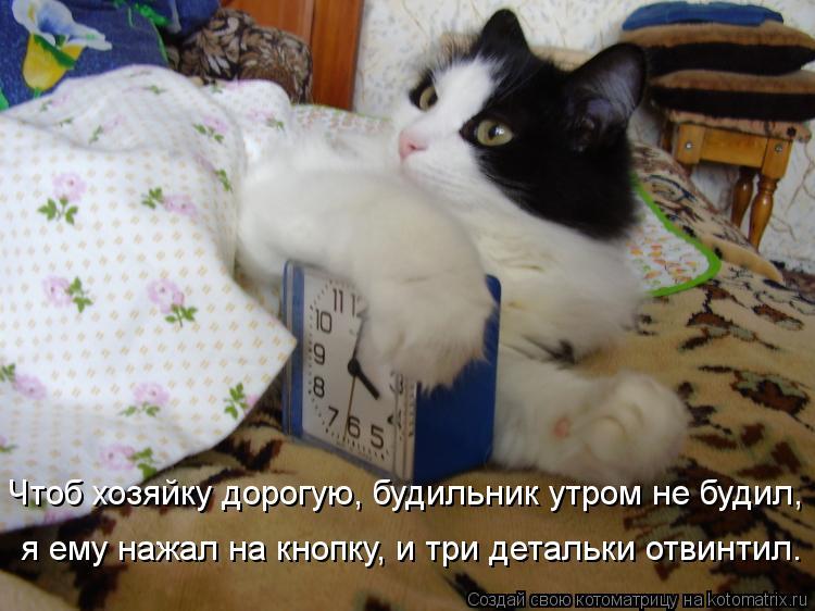Котоматрица: Чтоб хозяйку дорогую, будильник утром не будил, я ему нажал на кнопку, и три детальки отвинтил.