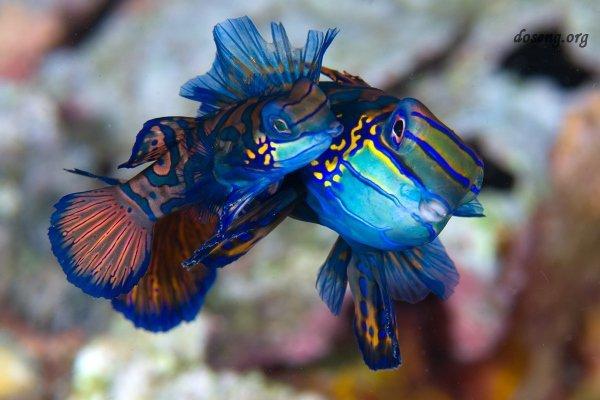 Потрясающее, какая завораживающая красота, спрятана в глубинах морей и океанов!Смотрим фото!