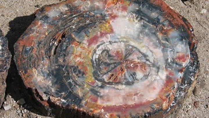 Кремниевое дерево. Наблюдени…