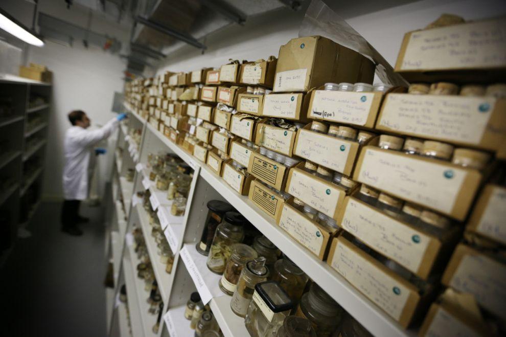 gmoz36 Лондонский музей зоологии и сравнительной анатомии Гранта