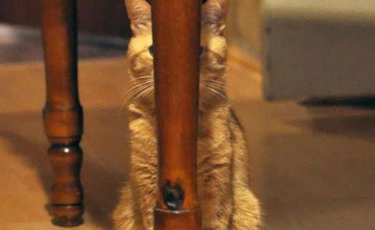 Коты-ниндзя, которые в совер…