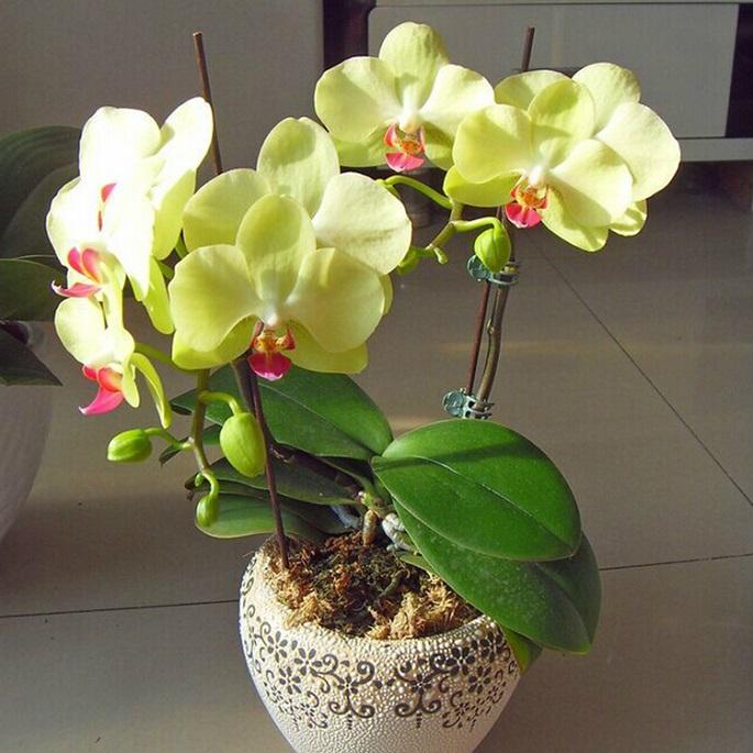 какие цветы должны быть в доме обязательно фото с названиями