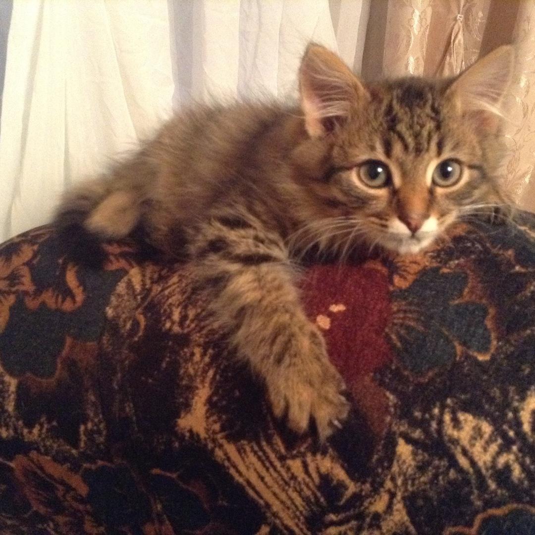 «Тяпа, ням-ням!» Этому коту везло с самого детства, а сейчас у него всё ещё лучше!