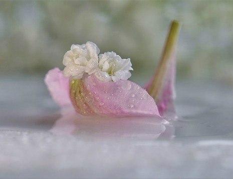 Капелька росы