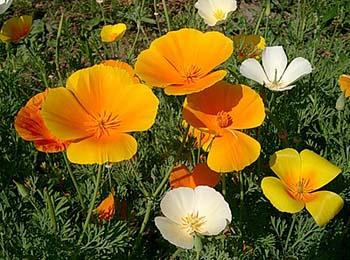 15 растений для первой детской клумбы