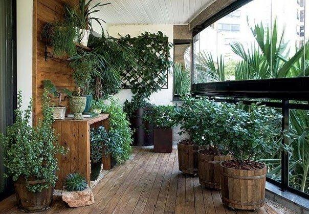 Эффективные удобрения для комнатных растений.