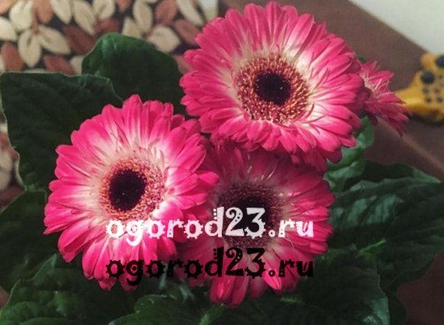 Цветы разные и как называется