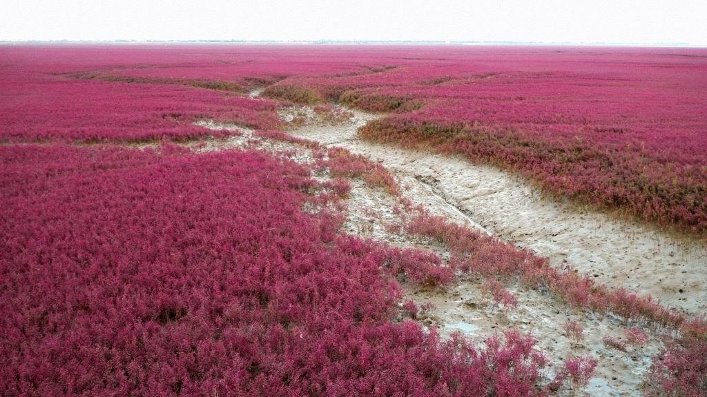 Красный пляж в Китае (8 фотографий), photo:2