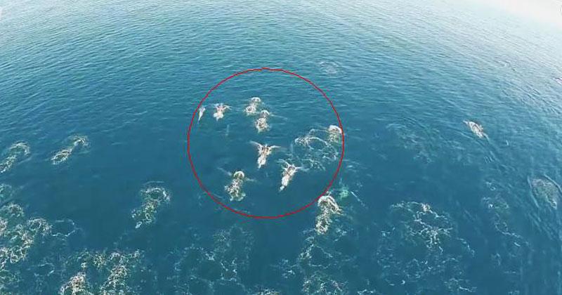 Дрон снял необычных существ в море. Неужели русалки?