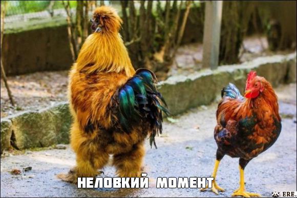 ВЕСЕЛЫЕ КАРТИНКИ С ПРИКОЛЬНЫМИ НАДПИСЯМИ.ЭДВАЙСЫ-53