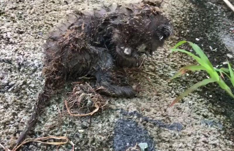 Маленький грязный котенок ле…